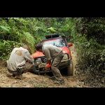 Shell  Helix  Driven  to  Extremes  -  MALESIA