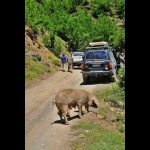 4x4  in  Albania:  Off-road  fra  le  aquile